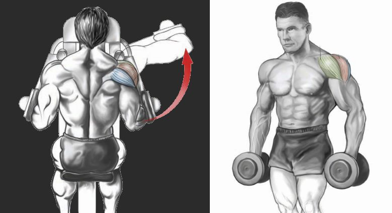 Free Weights vs. Machines: Which is Better?