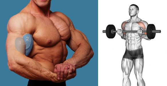 Drag Curls For Bigger Biceps