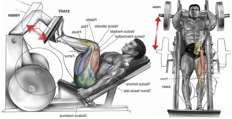 The 4 Best Leg Machine Exercises