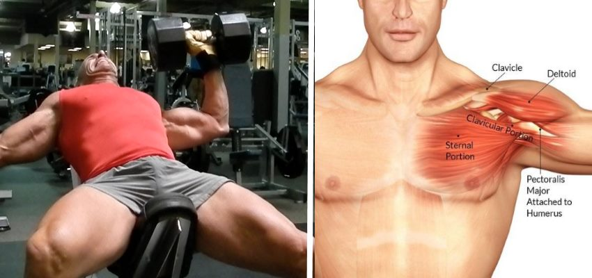 4 Best Exercises For A Bigger Chest