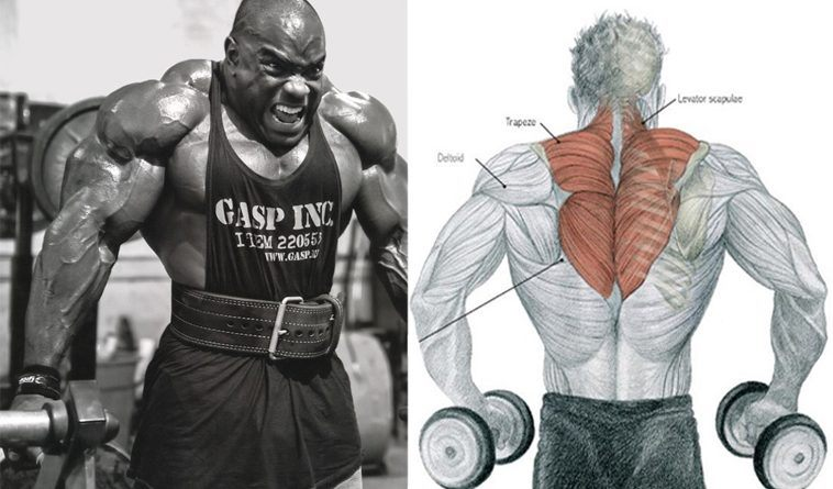 The 4 Best Traps Exercises