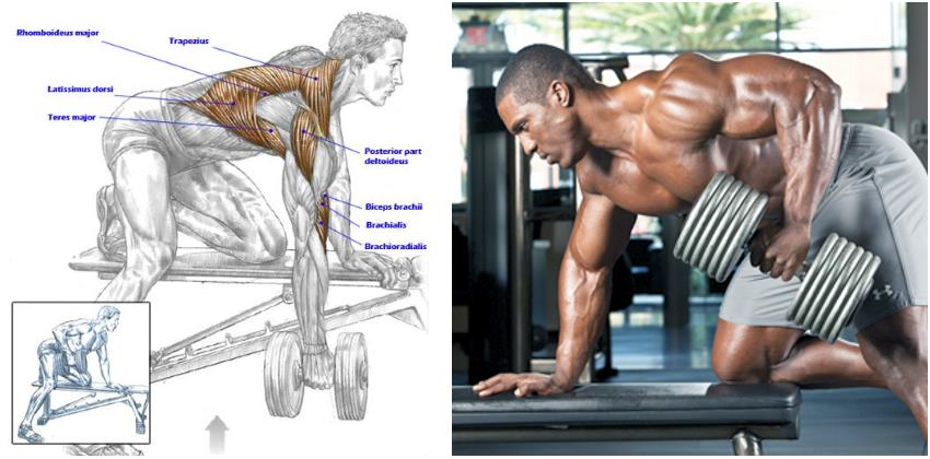 Mastering The Dumbbell Row: Form Flaws, Set Up & Execution