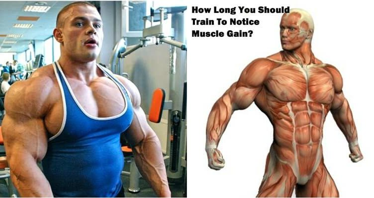 How Long You Should Train To Notice Muscle Gain?