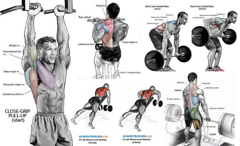 A Complete 8-Week Beginner/Intermediate Muscle Building Program