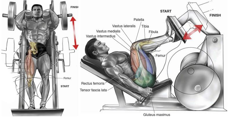 Hack Squat Vs Leg Press, Which Is Better?