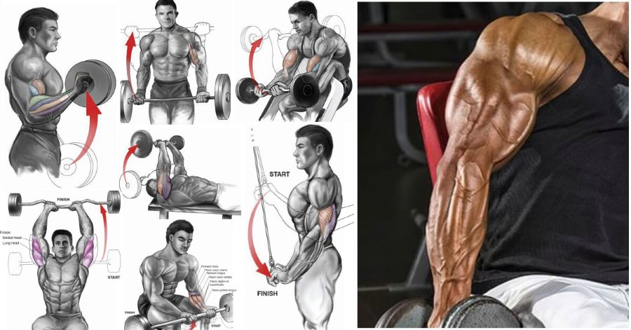 The 12 Best Bicep and Tricep Exercises for Mass