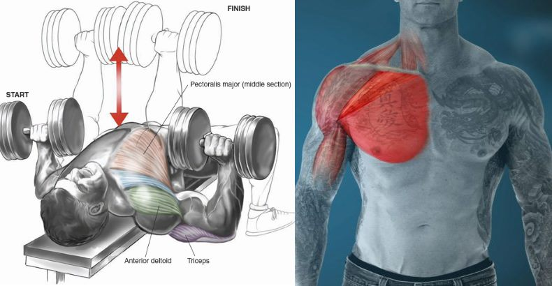 Why You Should Use Dumbbells Instead of Barbells for Chest