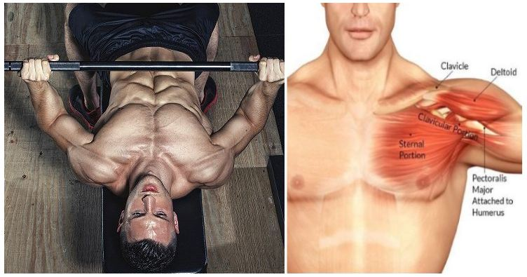 Workouts For Chest ? 4 Exercises For Building Mass