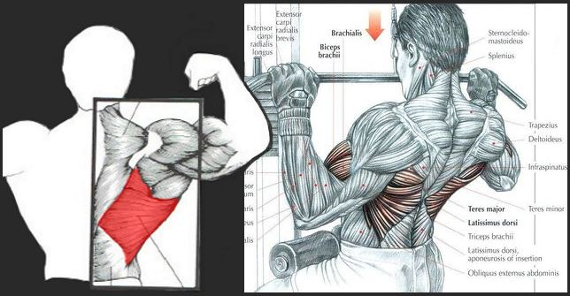 How To Build Bigger Lats ? Latissimus Dorsi Workout