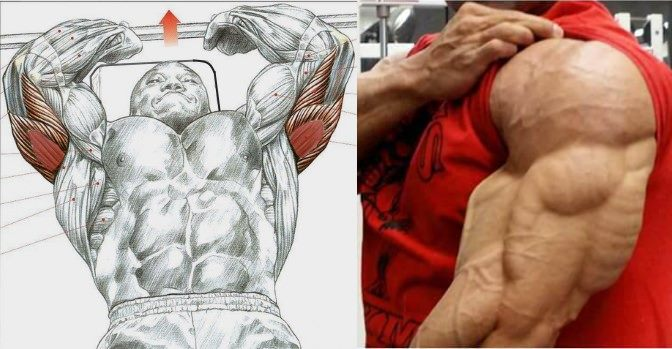 4 Triceps Exercises You Should Try!