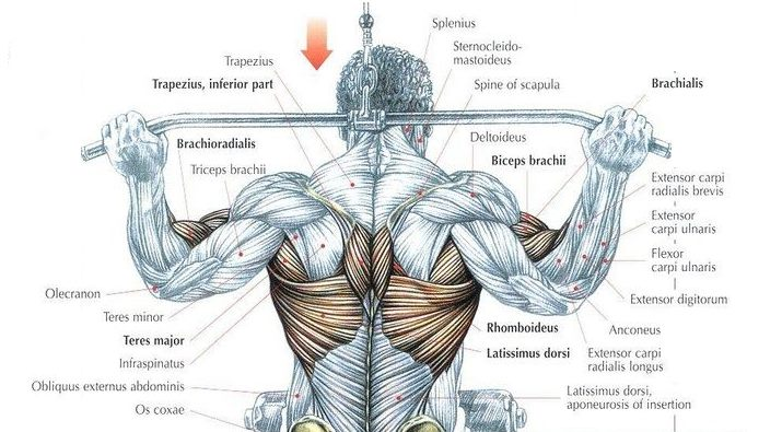 Are Behind The Neck Lat Pulldowns Bad for You